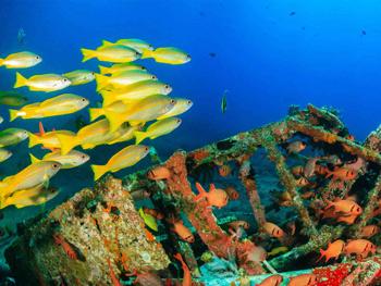 Malasia Labuan Marine Lif