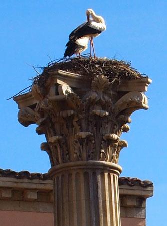 Lujoso lugar para un nido de cigüeña