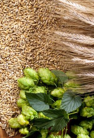 Lúpulo y Malta para elaborar Cerveza Artesana