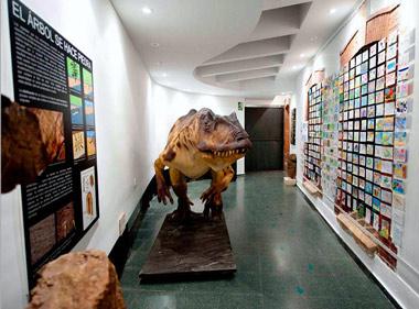Colección donada por el Colectivo Arqueológico-Paleontológico de Salas