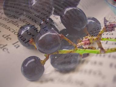 III Ciclo Literatura y vino