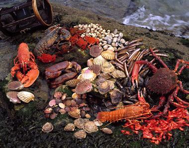 Comer Marisco en verano con seguridad