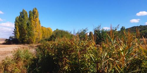 Un día de otoño