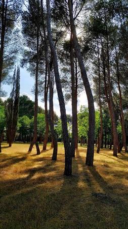 Fotografía: Merche Abad | Parque del General Gutiérrez