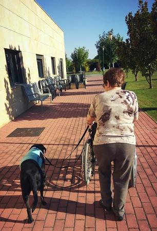 Fotografía: Facebook Vincula Intervenciones Asistidas con Perros