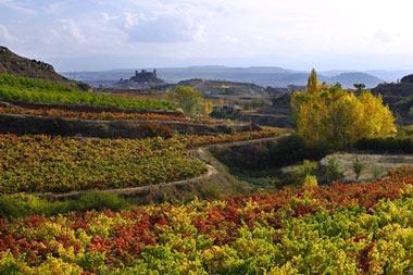 Rutas del Vino Ribera del Duero