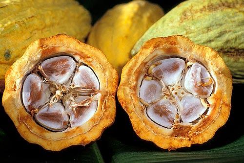 Comercio Justo. Semillas de Cacao.
