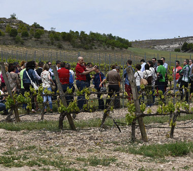 Pasaporte a la Ribera del Duero: acercarse al mundo del Vino